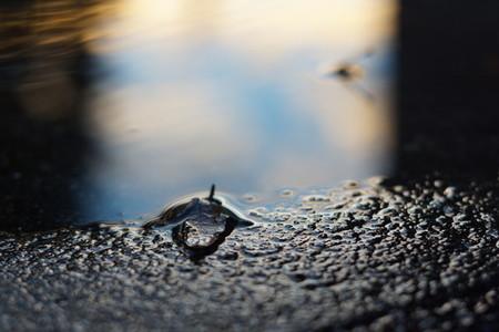 puddle 2