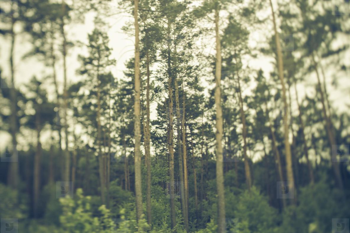 Landscape 04