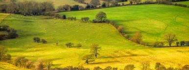 Rural Scenes 2
