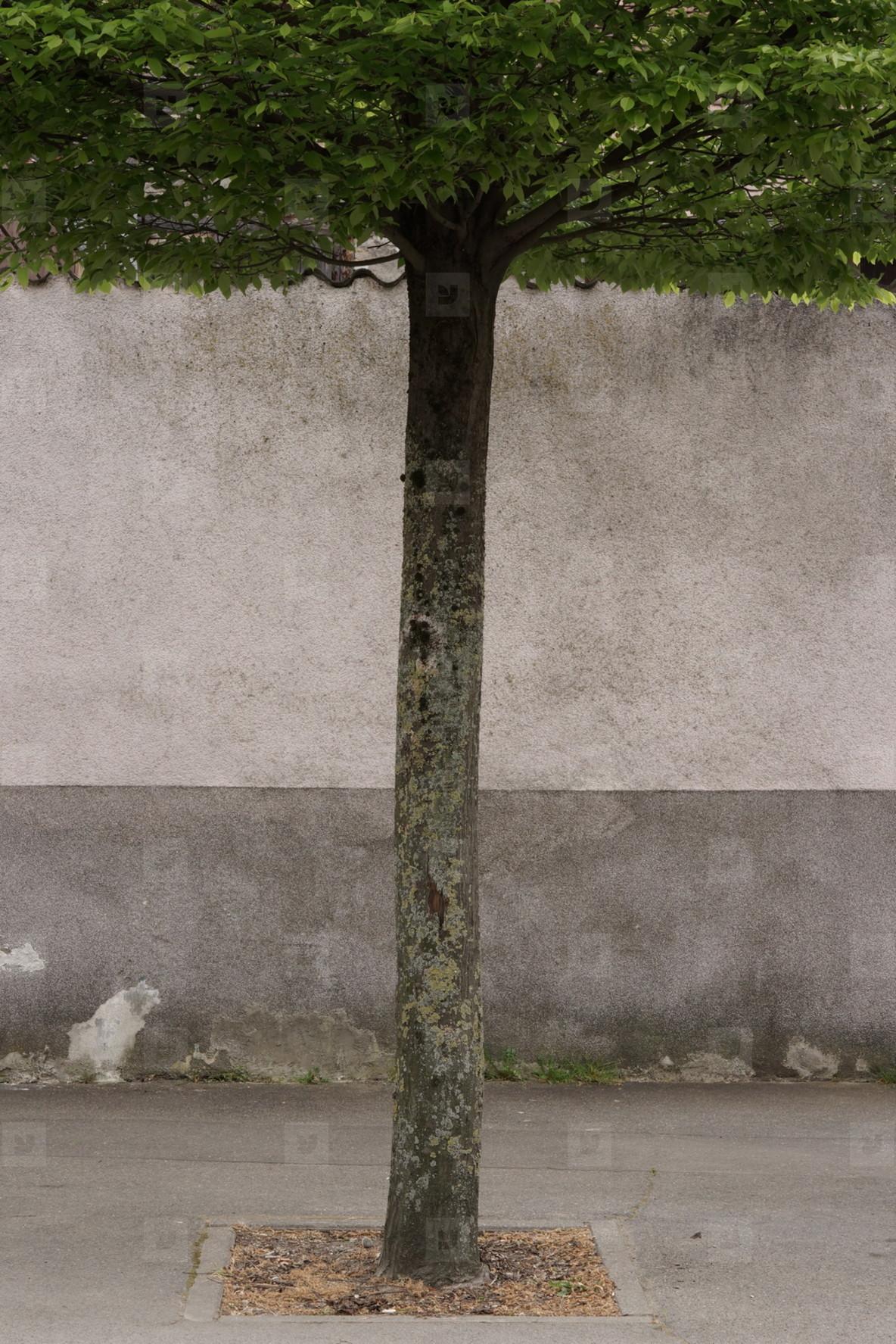 tree ltd