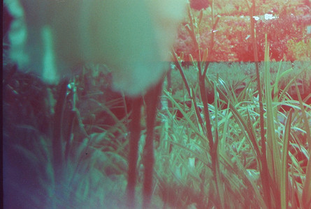 More Light Leaks 14