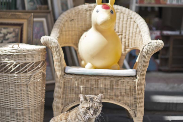 Flea market cat