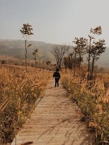 Child on Pathway