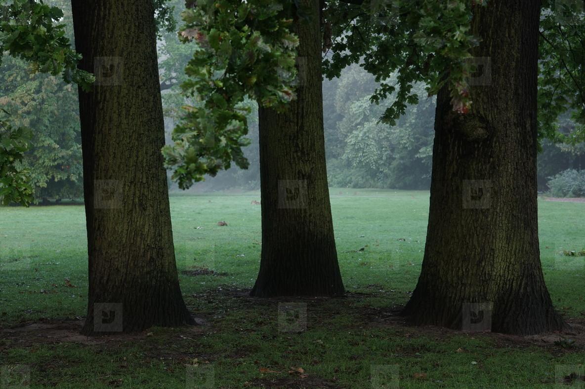 3 oaks