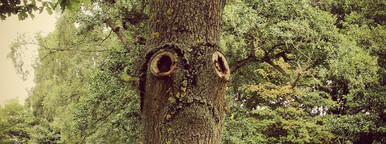 The saddest tree in the World
