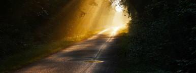 sunny path 2