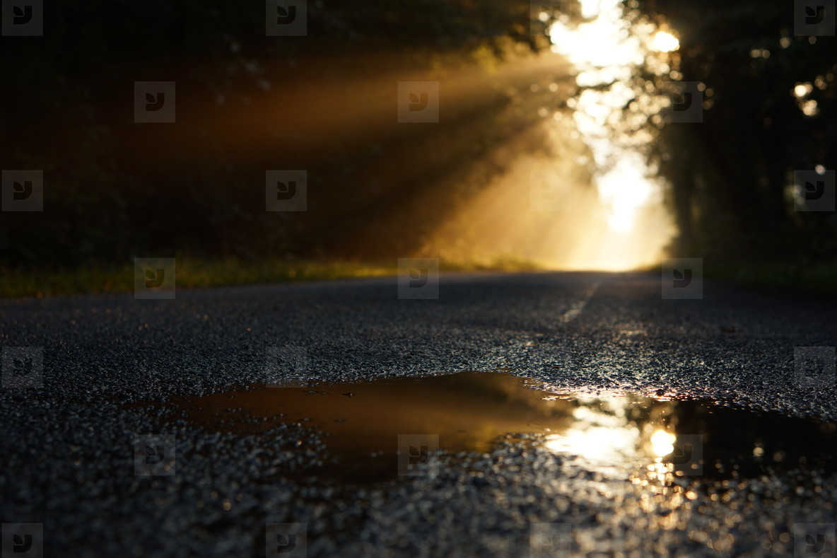 morning puddle