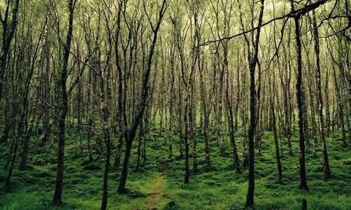 Glendalough woods