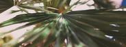 Tropics 1