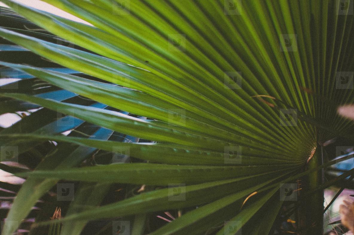 Tropics 5