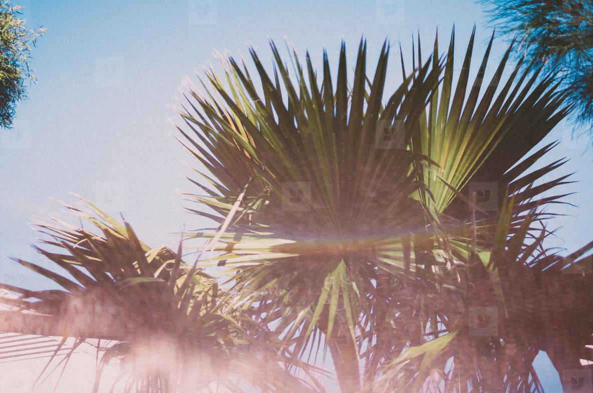 Tropics 6