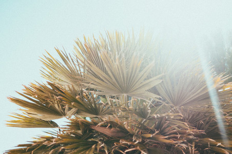 Tropics 10