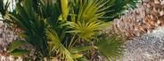Tropics 12