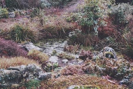 Garden 07