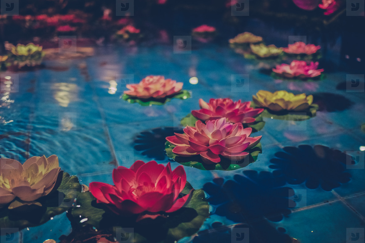 Photos Floating Flowers Youworkforthem