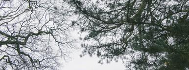 Kew Gardens  01