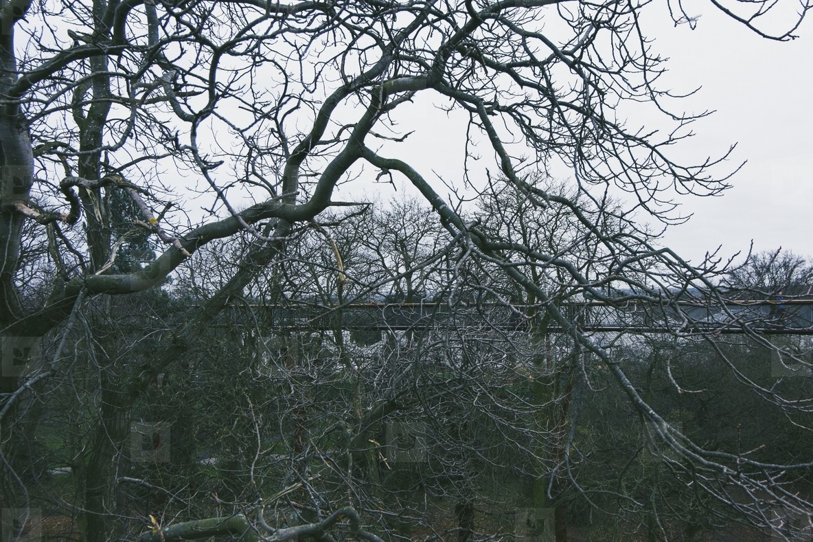Kew Gardens  04