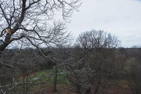 Kew Gardens 05