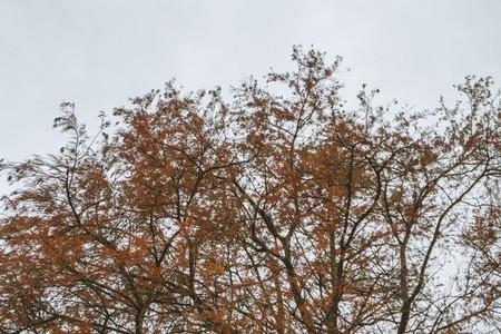 Kew Gardens  13