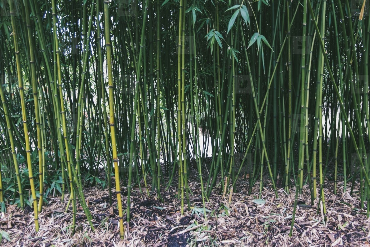 Kew Gardens  14