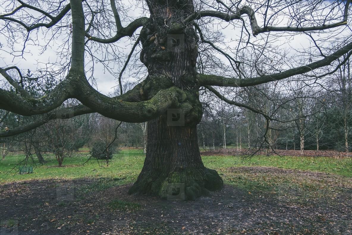 Kew Gardens  15