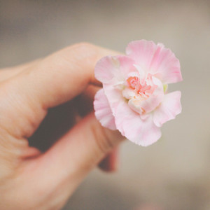 Hand holding pink flower