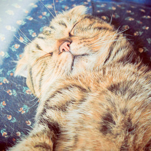 Sleeping cute cat