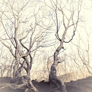 dried trees on mountain