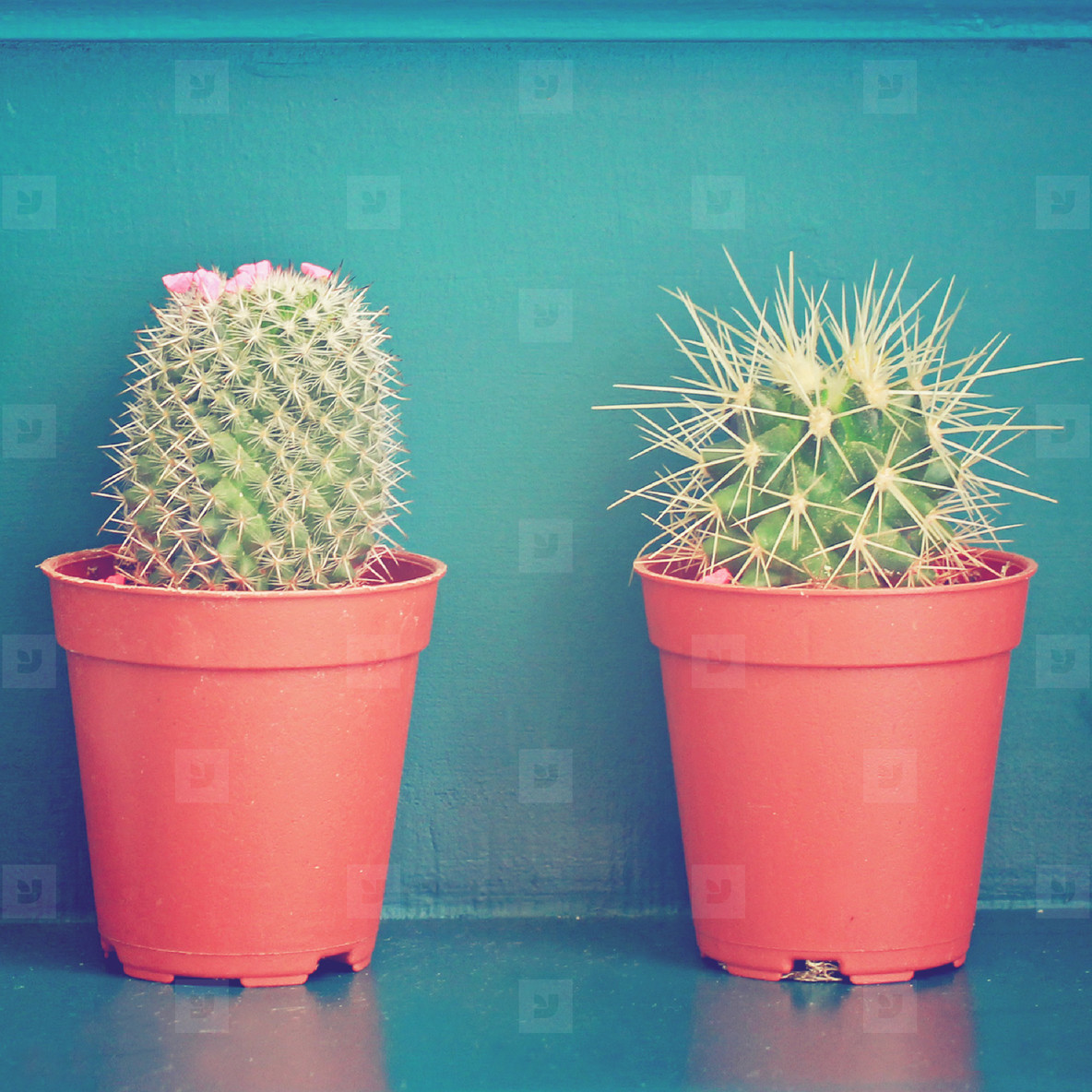 cactus with flower decorated