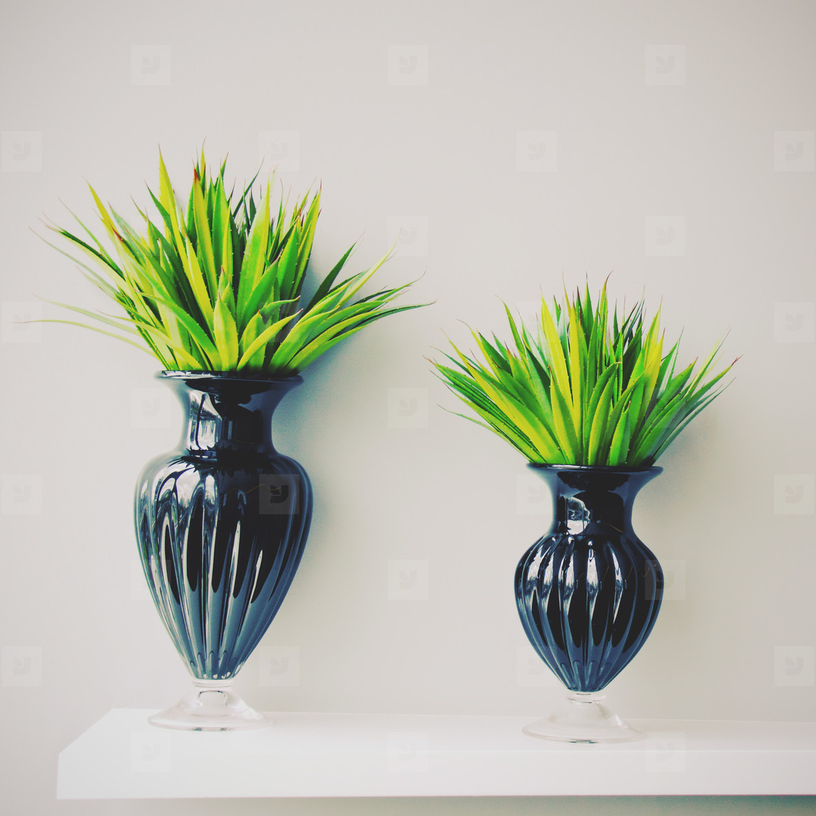 Plant in black vase decorated