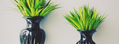 Plant in black vase decorated