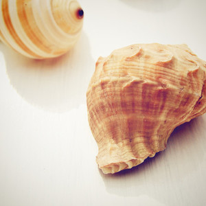 sea shell with retro filter effe