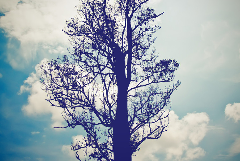 silhouette of the tree