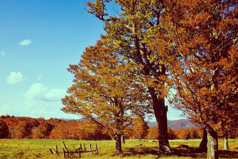 Welcome to autumn season