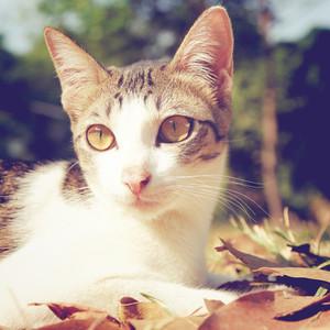 cute cat lying on grass