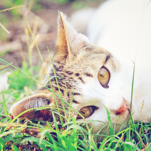 cute cat lying on grass