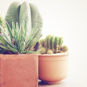 various of cactus