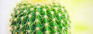 Fresh cactus in garden
