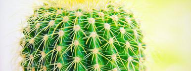 Fresh cactus in garden
