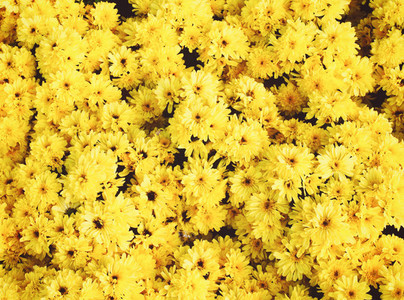 Background of yellow flowers