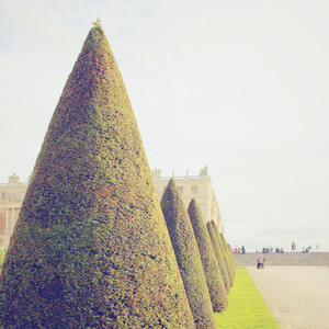 Line of topiary trees