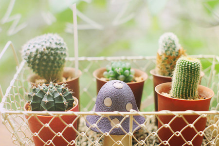 Small cactus in basket