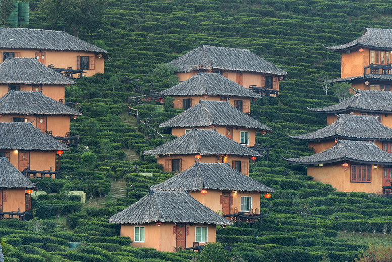 Tea Plantation Houses