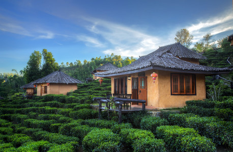 Tea Plantation Houses