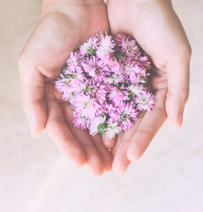 Pink flowers in hands