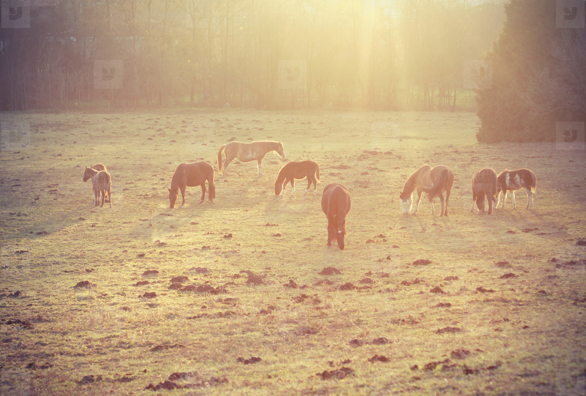 horses in the morning
