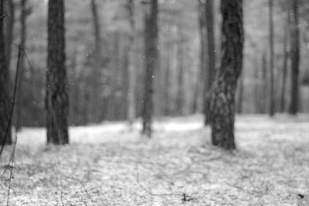 forest flakes