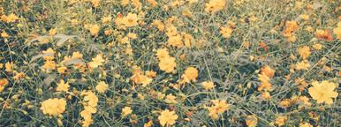 Landscape of beautiful flowered