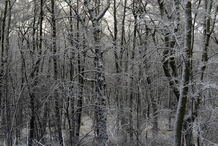 Snowy tress