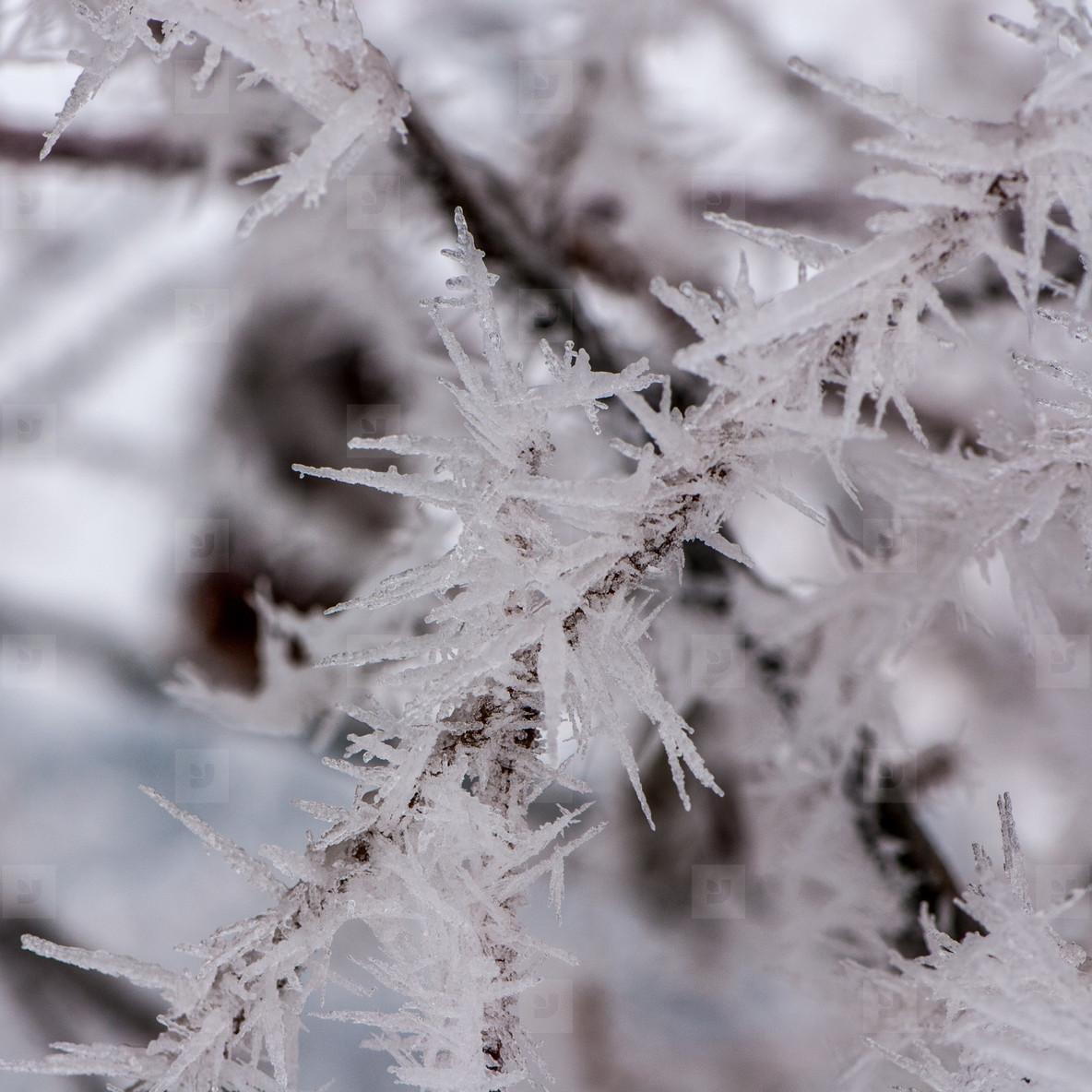 Ice peaks   nature